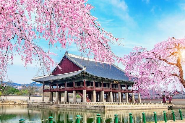 Palais Gyeongbokgung Avec Fleur De Cerisier Au Printemps, Séoul En Corée. Photo gratuit