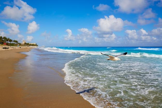 Palm beach beach, côte, floride, nous Photo Premium