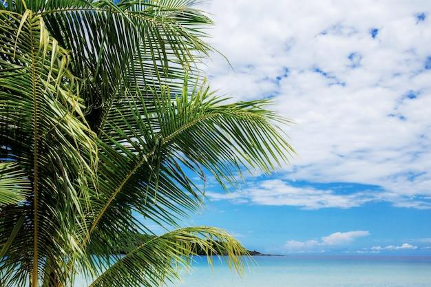 Palmier en mer avec ciel Photo Premium