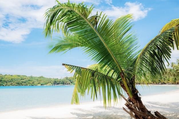 Palmier Sur La Plage En été Avec Ciel Bleu, Photo Premium