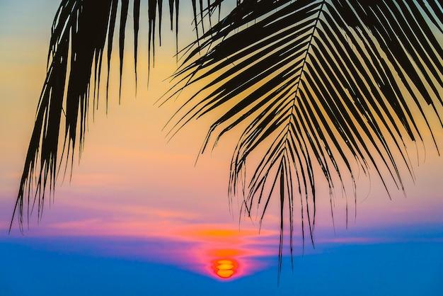 Palmier silhouette Photo gratuit