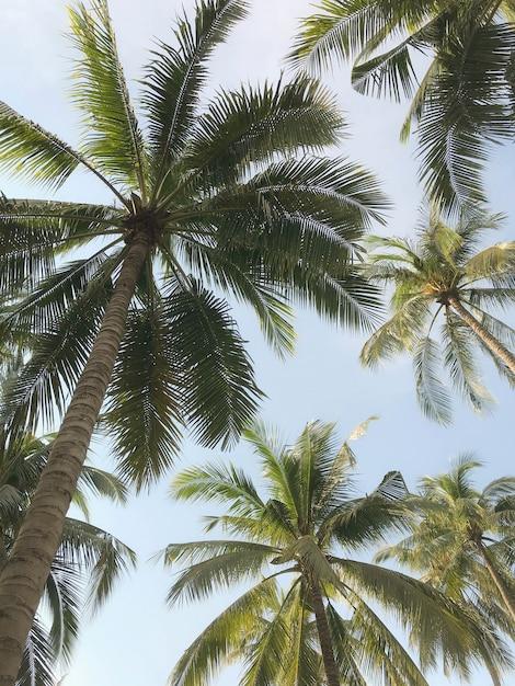 Palmier tropical dans le jardin Photo Premium