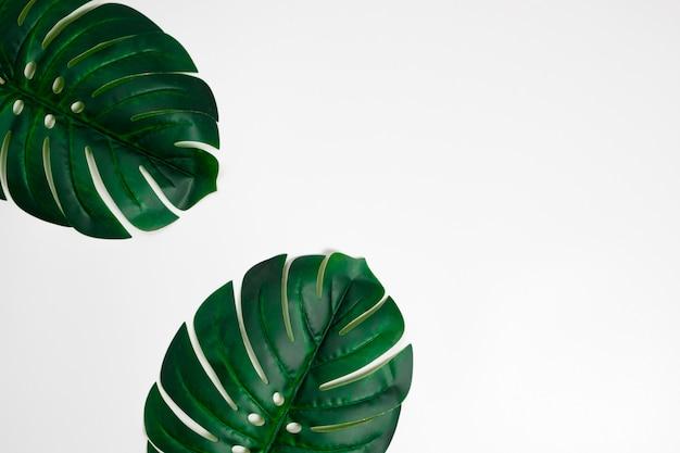 Palmier tropical laisse monstera sur fond blanc. lay plat. concept minimal vue de dessus. Photo Premium