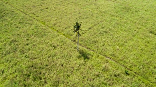 Palmier Unique Au Milieu D'un Champ Plat Sur Une île Photo gratuit