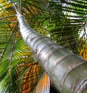 Palmier, De Vacances Photo gratuit
