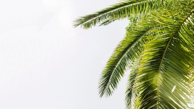 Palmiers courbés verts contre le ciel Photo gratuit