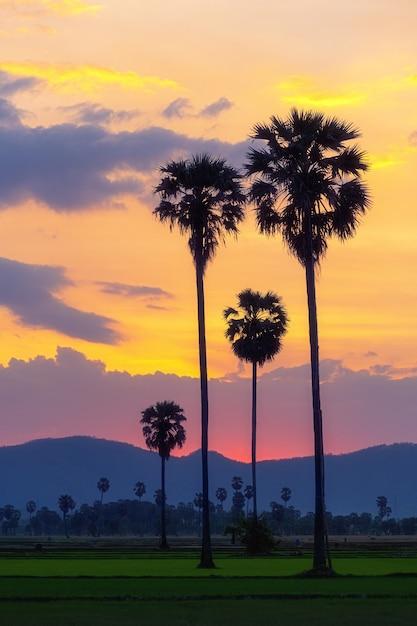 Palmiers Dans Les Champs Avec Un Beau Ciel Coloré Photo Premium