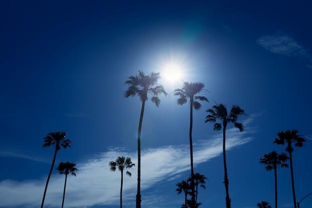 Palmiers dans le sud de la californie, région de newport Photo Premium