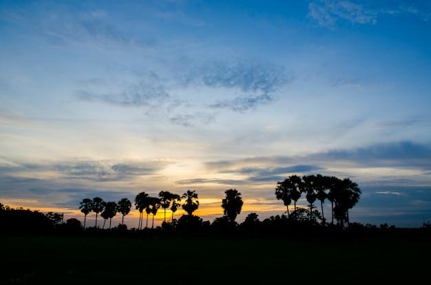 Palmiers sur le fond d'un beau coucher de soleil Photo Premium