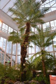 Palmiers Fougères Photo gratuit