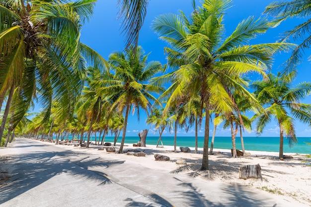 Palmiers de noix de coco sur la plage de sable blanc et ciel bleu au sud de la thaïlande Photo Premium