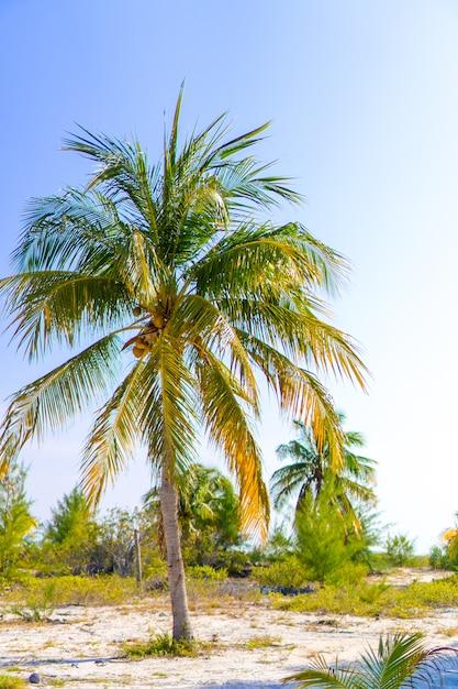 Palmiers sur la plage de sable blanc. Photo Premium