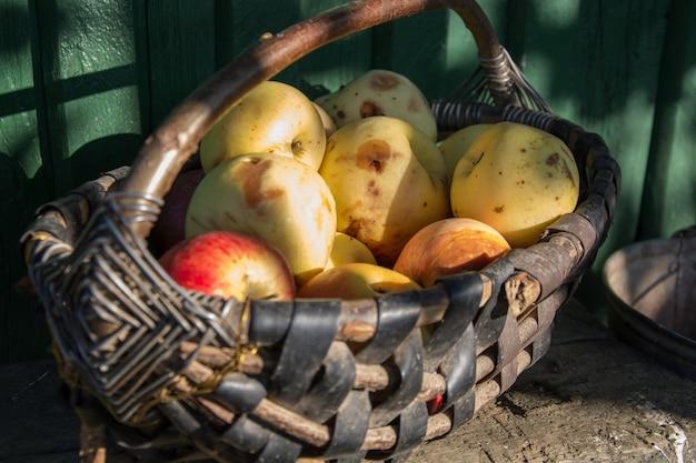 Panier en osier avec des pommes fraîches et laides biologiques Photo Premium