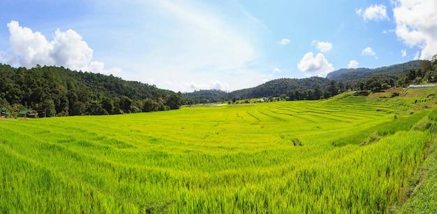 Panorama De Rizières En Terrasses Vertes à Mae Klang Luang, Mae Chaem, Chiang Mai, Thaïlande Photo Premium