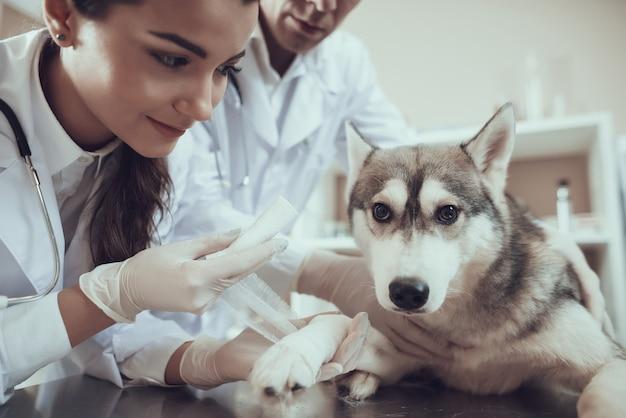 Pansement de la première aide vétérinaire en clinique Photo Premium