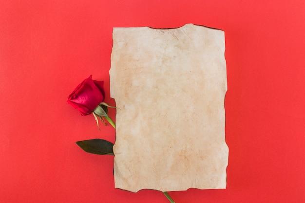 Papier et fleur merveilleuse fraîche Photo gratuit