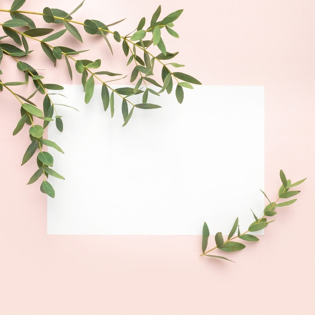 Papier Vierge, Branches D'eucalyptus Sur Fond Rose Pastel. Plat, Vue De Dessus, Espace De Copie Photo Premium