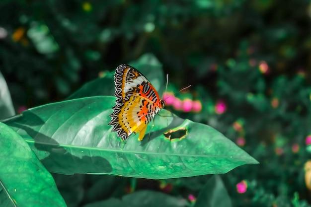 Papillon. beau papillon tropical sur fond de nature floue. papillons colorés Photo Premium