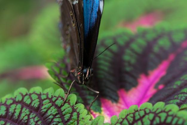Papillon bleu vue de face sur les feuilles colorées Photo gratuit