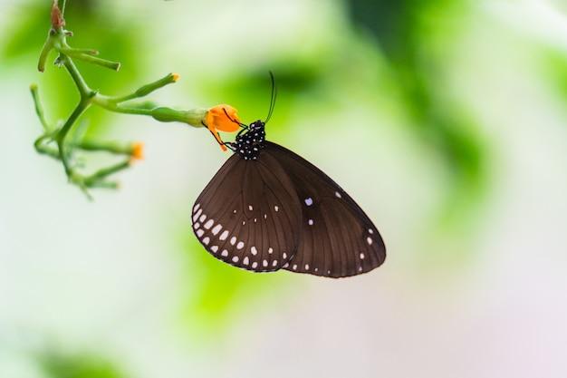 Papillon coloré tropical Photo Premium