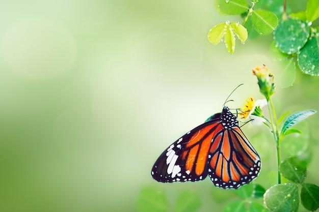 Papillon à l'état sauvage Photo gratuit