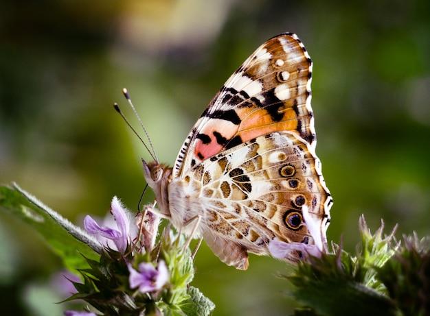 Papillon sur une fleur de jardin. Photo Premium