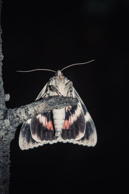 Papillon Avec Gros Plan Coloré Ailes Orange En Plein Air. Photo Premium