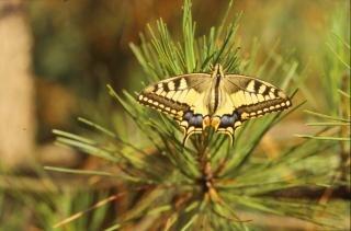 Papillon jaune, lumineuse Photo gratuit