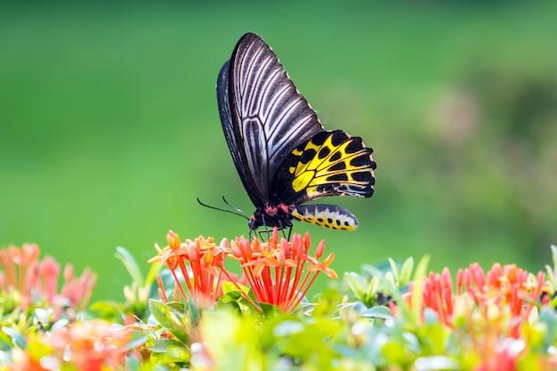 Papillon mouche dans la nature du matin. Photo Premium