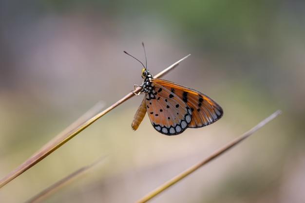 Papillon Multicolore Sur Tige Brune Photo gratuit