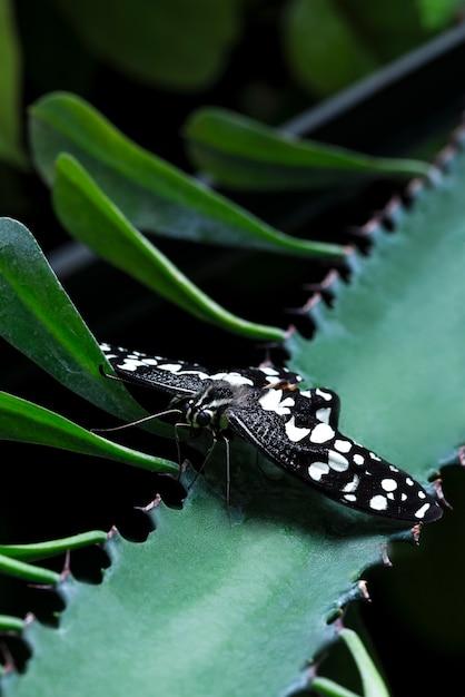 Papillon noir sur l'aloe vera Photo gratuit