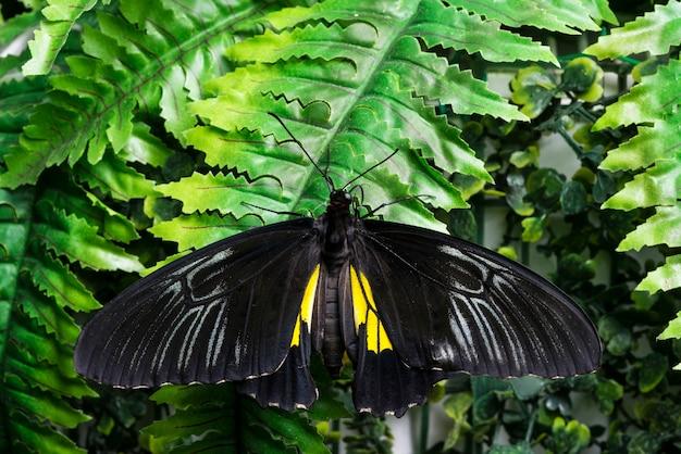 Papillon noir vue de dessus sur les feuilles tropicales Photo gratuit