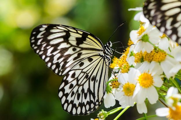Papillon Ohgomadara Grand Papillon Noir Et Blanc Reposant Sur Des Fleurs Photo Premium