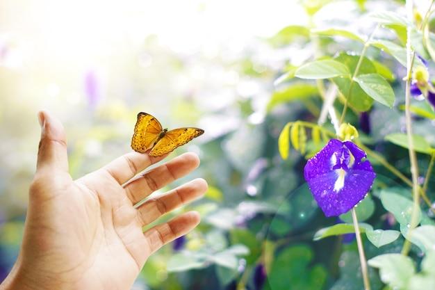 Papillon sur place papillons colorés dans la forêt avec pois. Photo Premium