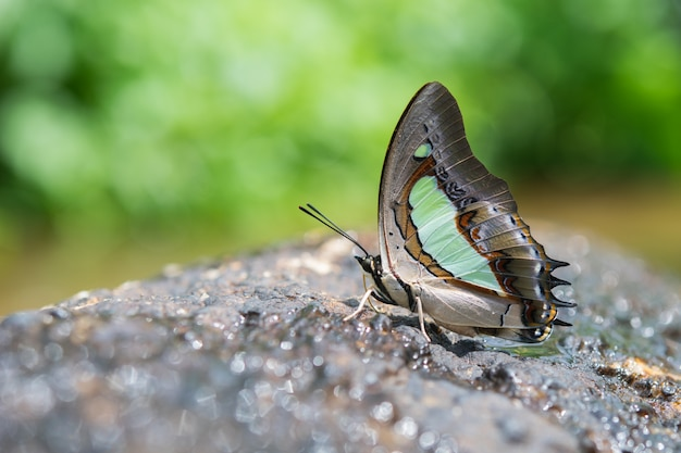 Papillon sur un rocher Photo gratuit