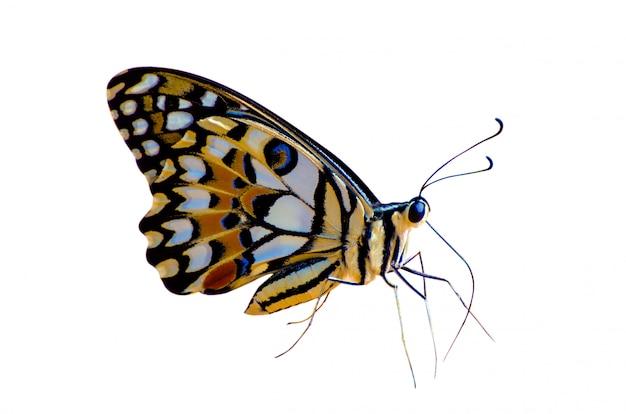 Papillon taches orange jaune blanc fond isoler Photo Premium