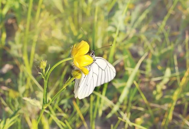 Papillon sur un terrain d'herbe avec une lumière chaude Photo Premium
