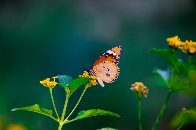 Le papillon tigre uni Photo Premium