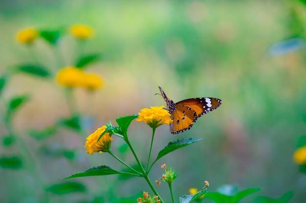 Papillon tigre Photo Premium