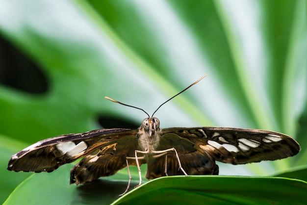 Papillon vue de face avec un arrière-plan flou Photo gratuit