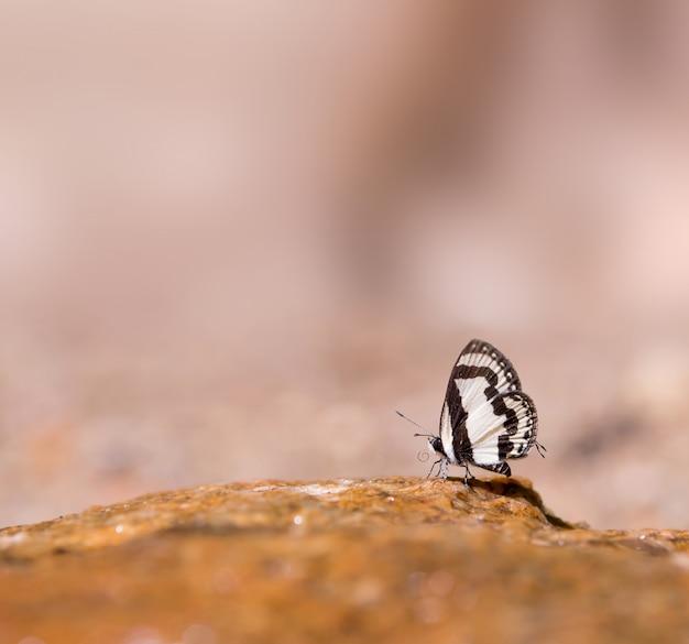 Papillon Photo gratuit