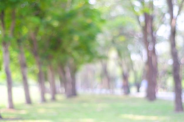 Parc flou avec fond clair bokeh Photo Premium