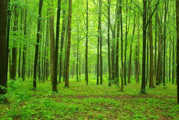 Parc De La Forêt Verte Photo Premium