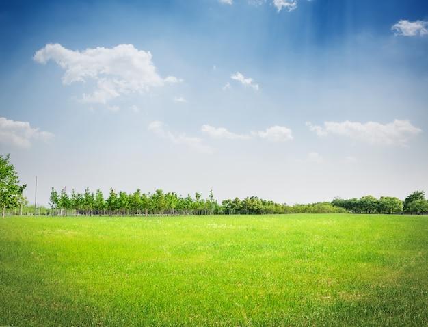Parc D'herbe Photo gratuit