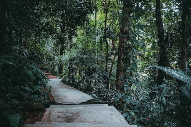 Parc de jungle tropicale. effet de couleur vintage Photo Premium