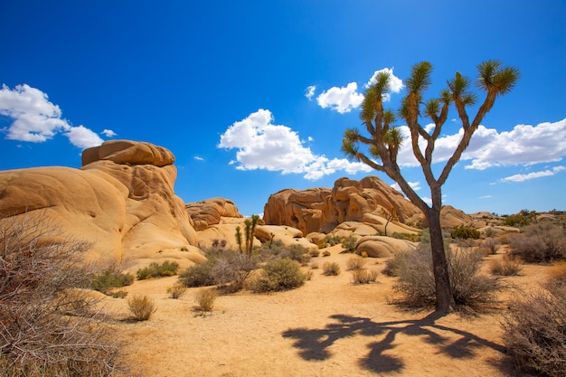 Parc national de joshua tree jumbo rocks yucca valley désert californie Photo Premium