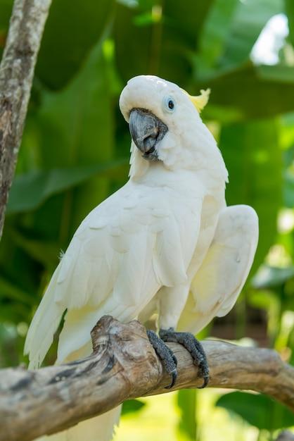 Parc Ornithologique De Bali à Sanur Photo Premium