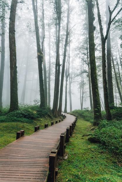 Passerelle en bois menant aux pins dans la forêt avec le brouillard à alishan. Photo Premium