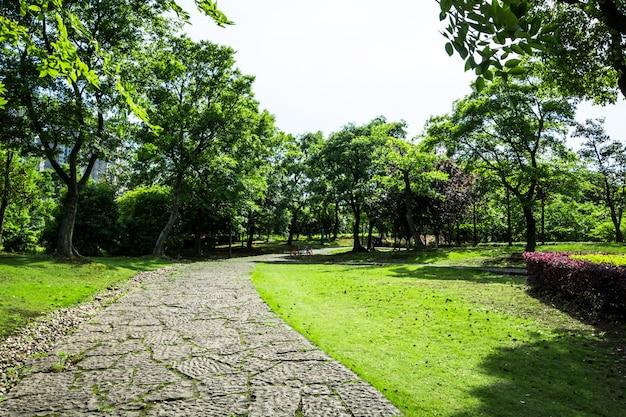 Passerelle Dans Le Jardin à Bangkok, Thaïlande Photo gratuit