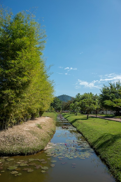 Passerelle étang et parc Photo gratuit